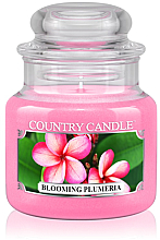 """Fragrances, Perfumes, Cosmetics Scented Candle """"Blooming Plumeria"""" (jar) - Country Candle Blooming Plumeria"""