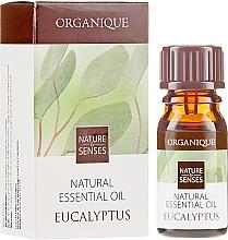 """Fragrances, Perfumes, Cosmetics Essential Oil """"Eucalyptus"""" - Organique Natural Essential Oil Eucalyptus"""